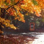 秋にはキレイな紅葉が…!